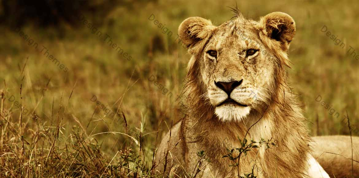 Lord of the jungle!